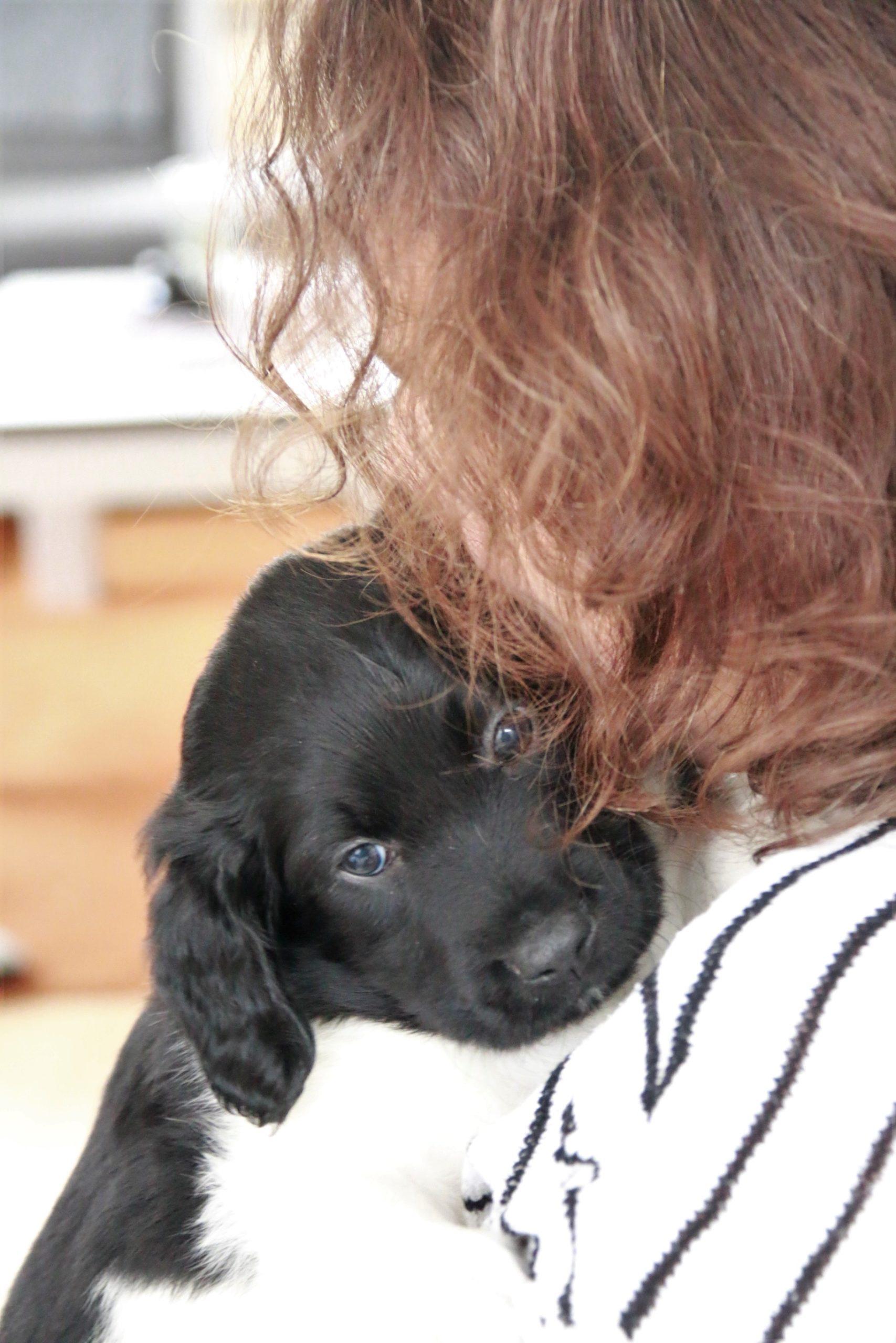 Online cursus Puppymassage